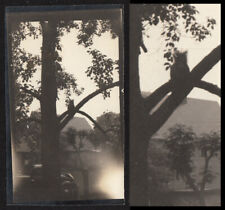 SPOOKY OWL SINISTER SILHOUETTE SCARY NEIGHBORHOOD MOMENT ~ 1920s VINTAGE PHOTO