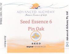 Seed Essence #6 Spiritual Path - Advanced Alchemy 25ml Pin Oak