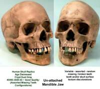 Aged Distressed Human Skull-Life Size Replica Relic Crypt Gray #3093-9020 USA