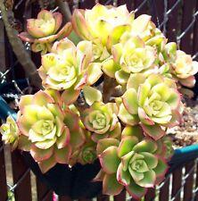 Cactus & Succulent Plants