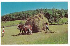 HAYING TIME Horses Wagon ODD HAT Farmer Kids  SUGARCREEK Ohio Postcard OH 1966