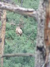 New Mexico Hunting Trips & Leases