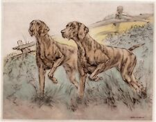 HUNGARIAN VIZSLA DOG LIMITED EDITION PRINT DryPoint ENGRAVING by Henry Wilkinson