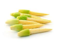 Vegetable Seed BABY CORN - Hi Yielding Hybrid Sweet Corn Seed - Pack of 25 Seeds
