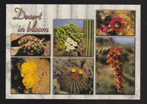 The Desert In Bloom Claret Cup-Hedgehog Giant Saguaro Cacti Ocotillo Barrel.. pc