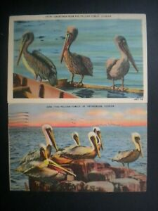 LOT OF 2 LINEN POSTCARD VIEWS OF THE PELICAN FAMILY, FLORIDA, 1940'S