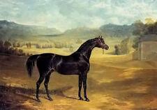 Oil painting john frederick herring the bay stallion jack spigot horse landscape