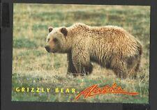 Alaska Joe Colour Postcard The Humped back Grizzly Bear Alaska unposted