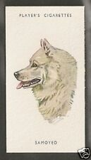 1940 UK Peter Biegel Dog Art Head Study Player Cigarette Card SAMOYED SAMOYEDE