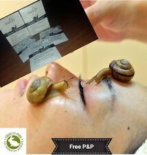 Snail Mucin Multifunction Facial Cream TianDe 10ml