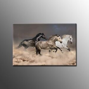 FRAMED Animal canvas Painting Prints Horse Picture Wall Art For Home Decoration