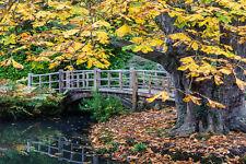SUPERBA giardino giapponese paesaggio tela # 307 qualità Incorniciato Wall Art Picture A1