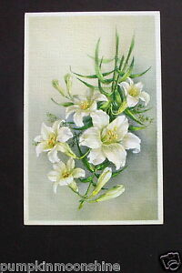 # I 606- Vintage Unused Belgium Greeting Post Card Pretty White Easter Lillies