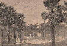 Carnauba Palms. Brazil 1885 old antique vintage print picture