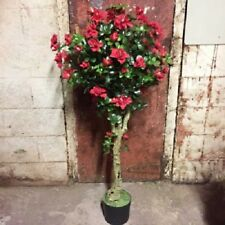 2 x 120cm AZALEA TOPIARY FLOWER TREE POTTED - Get 2 Plants