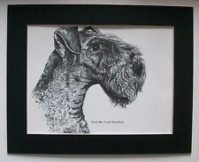 Kerry Blue Terrier Dog Print Gladys Emerson Cook Bookplate 1962 8x10 Matted