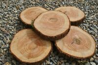 X5 LOG TREE SLICE 25-30CM Wedding cake table centre piece rustic stand wood