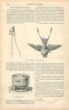 Jouets Scientifiques Lapin Oiseau & Poissons Magiques GRAVURE ANTIQUE PRINT 1880