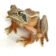 Yujin The Frog in Colour Mini Figure Japanes Brown Frog 2006 Japan