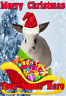 Rabbit Santa Sleigh nnc255 Christmas Xmas Card A5 Personalised Greetings