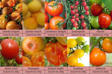 Tomatensamen, 10 Spezialitäten Sorten, Samen Set ,,