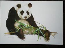 POSTCARD PANDA WITH BAMBOO SHOOTS - PAULING JAY - MEDICI SOC