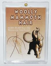 WOOLLY MAMMOTH Genuine Hair w/ COA PLEISTOCENE for Fossil Collectors #188 5o