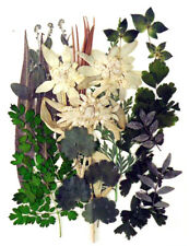 Pressed flowers, Edelweiss, various green foliage, floral art craft scrapbooking