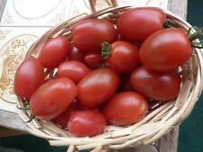 Rosa  Eier Tomaten Party Tomaten auch  für  Balkon   20 +Stück Saatgut