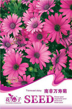 Butterfly 15 South Africa Pink Transvaal Daisy Flower Seeds A162