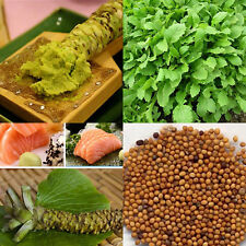 100pcs Real wasabi Japanese horseradish vegetable Fresh seeds Plant
