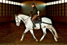 The Genuine Equiband System from Equicore Concepts for horse core conditioning!
