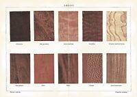A6392 Legno - Stampa Antica del 1928 - Cromolitografia