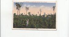 B80932 nucleo colonial gaviao peixoto plantacao de fum  brazil  front/back image