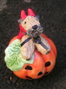 Soft Coated Wheaten Terrier DEVIL PUP on a PUMPKIN!