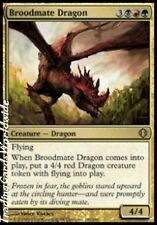 Broodmate Dragon // Foil // NM // Shards of Alara // engl. // Magic Gathering