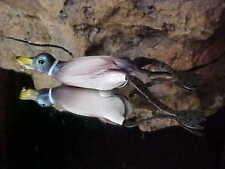 "SAVAGE GEAR 3"" MALLARD 3D HOLLO BODY FRUCK Floating Fishing Lure HD-75-AM"