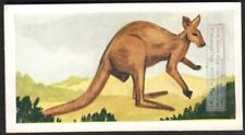 Kangroo Australia Marsupial 60+ Y/O Ad Trade Card