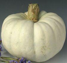 25 Seeds Pumpkin Silver Moon