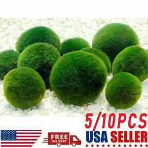 10x Nano Marimo Moss Ball-algae Live Aquarium Plant Fish Tank Supply Decor 1cm