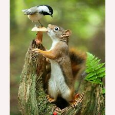 DIY Diamond Embroidery Painting Squirrel Eating Kits Full 5D Drill Art Crafts