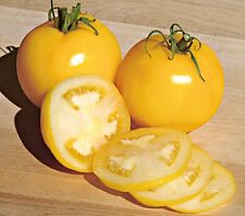 Tomato Seeds 35 - Garden peach - Rare Heirloom