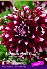 Dahlia Dinnerplate Special X-Factor WPC Prins Quality Bulb/Tuber Pack x1