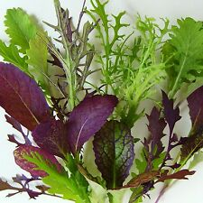 MESCLUN - MUSTARD MEGA-MIX - 1200 Seeds [..a mouthtrembling mix of salad leaves]