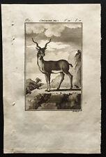 1799 - Buffon - L'antilope mâle - Gravure zoologie