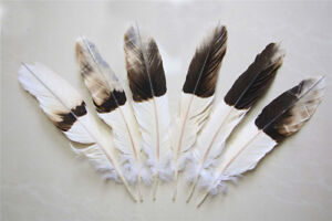 12pcs natural tail Feathers dyed coffee 12-16 inch/30-40 cm Carnival Diy costume