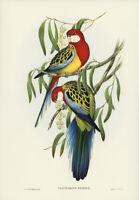 JOHN GOULD ROSE HILL PARAKEET (EASTERN ROSELLA) VINTAGE BIRD ART PRINT POSTER