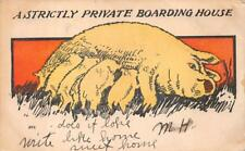 A STRICTLY PRIVATE BOARDING HOUSE PIGS NURSING COMIC POSTCARD (c. 1905)