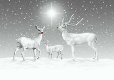 Reindeer in Snow - Charity Christmas Cards - CCS Adoption