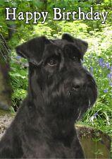 Schnauzer Dog Design A6 Textured Birthday Card BDGIANTSCHNZR-1a paws2print